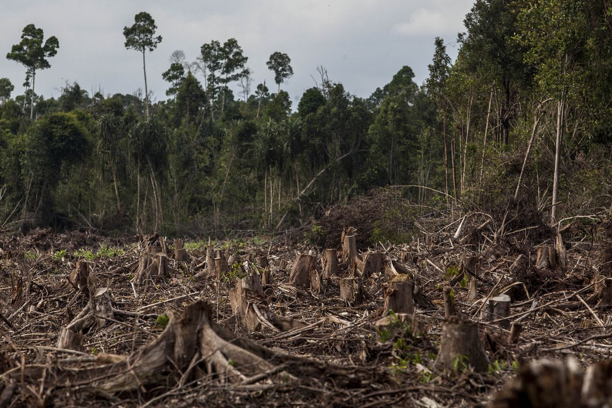 Destroyed forest in Indonesia
