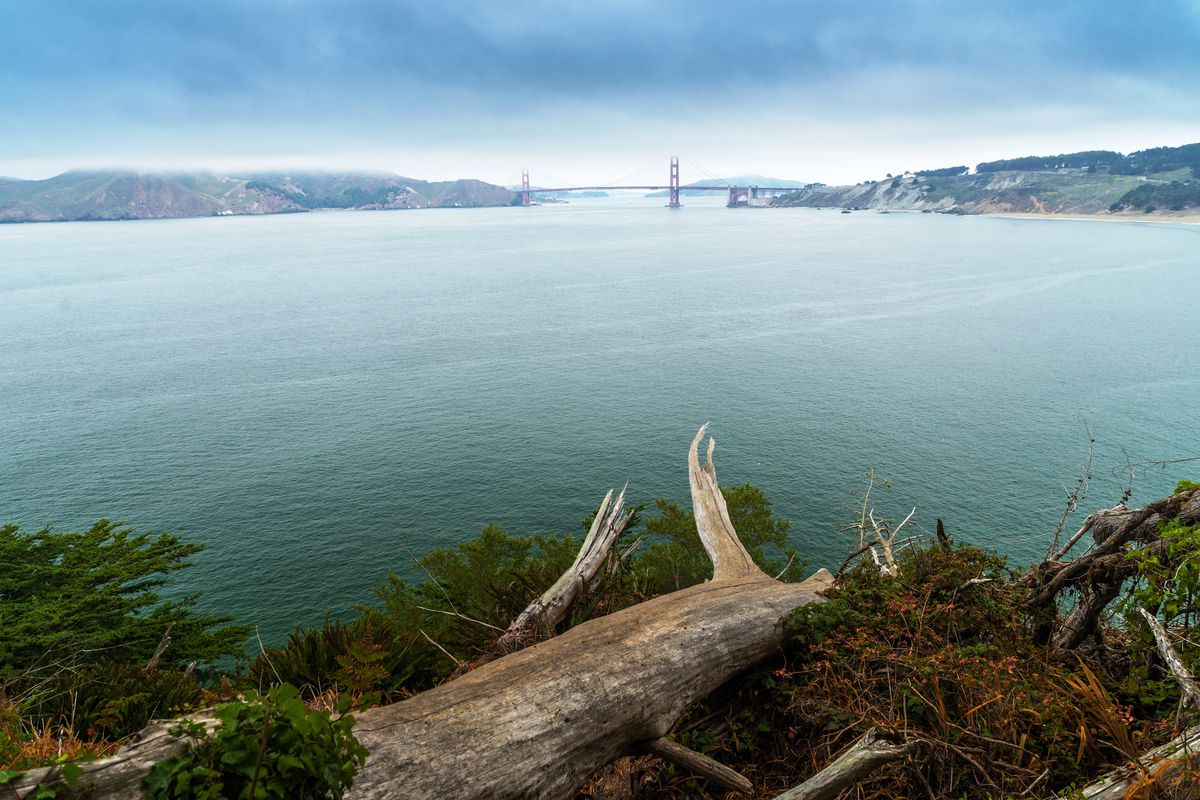 A wide shot of the bay with the Golden Gate bridge as a tiny speck in the distance and a grassy bank with a fallen log in the foreground.