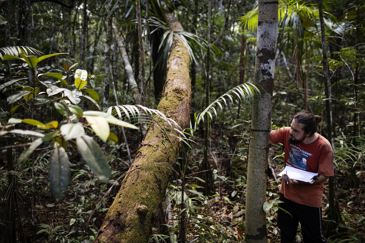Scientist Layon Demarchi measures the growth of a tree in the Amazon rainforest.