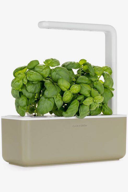 An indoor herb garden with basil