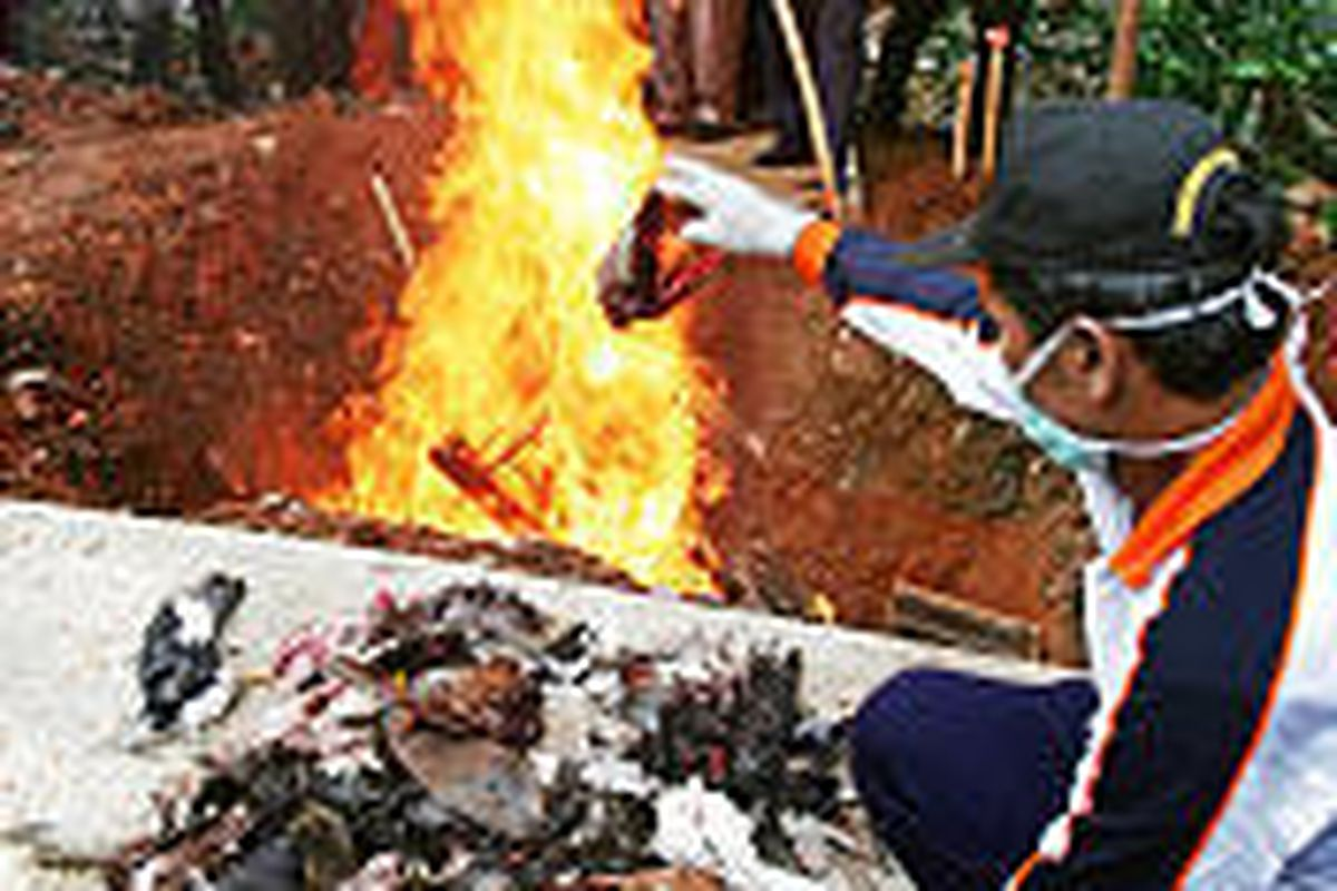 An official in Jakarta, Indonesia, throws slaughtered birds into a fire during a poultry culling Friday. Bird flu has been detected in poultry throughout Jakarta.