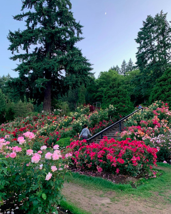 Vibrant pink and red rose gardens of all varieties are in full bloom as a woman walks up a staircase in the distance.