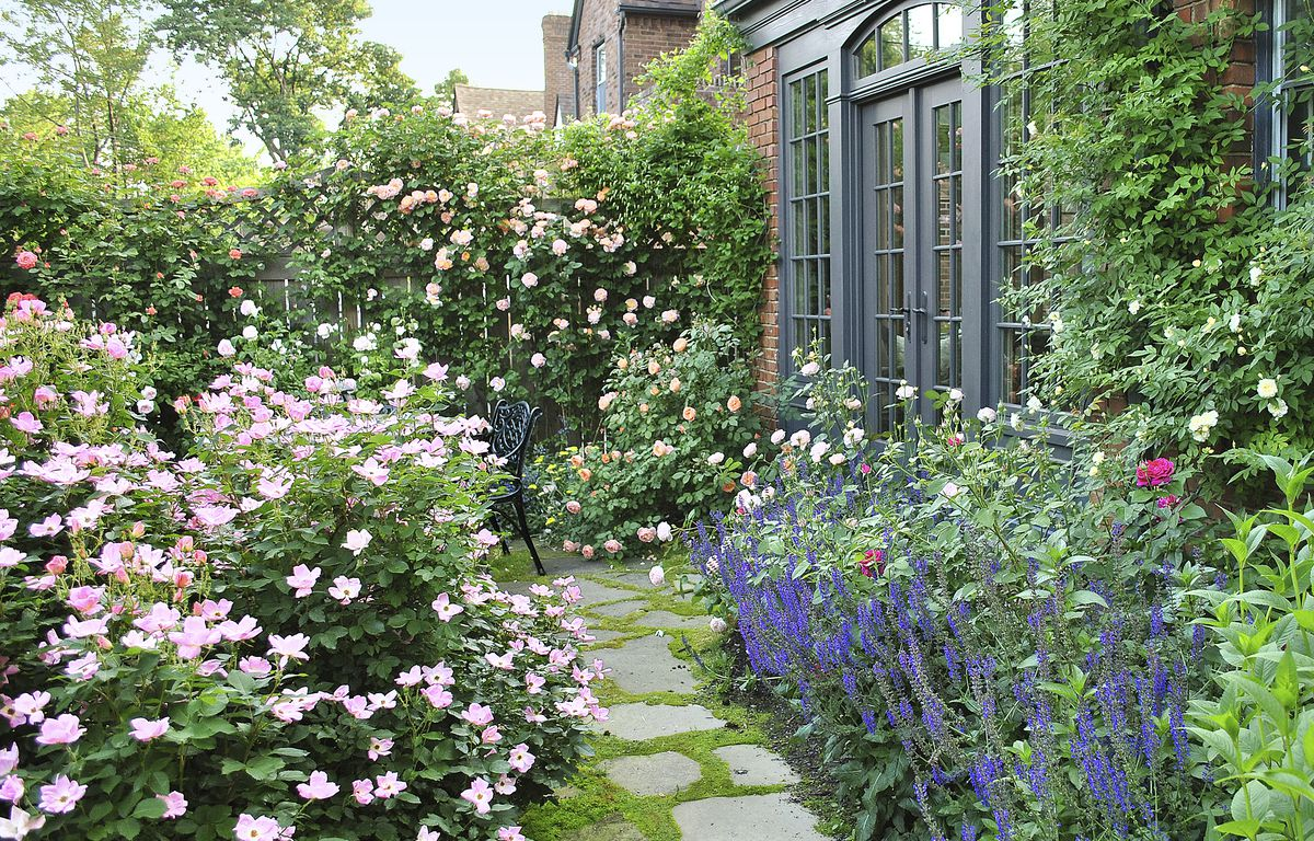 From Blah Lawn to Backyard Rose Garden Paradise - This Old ...