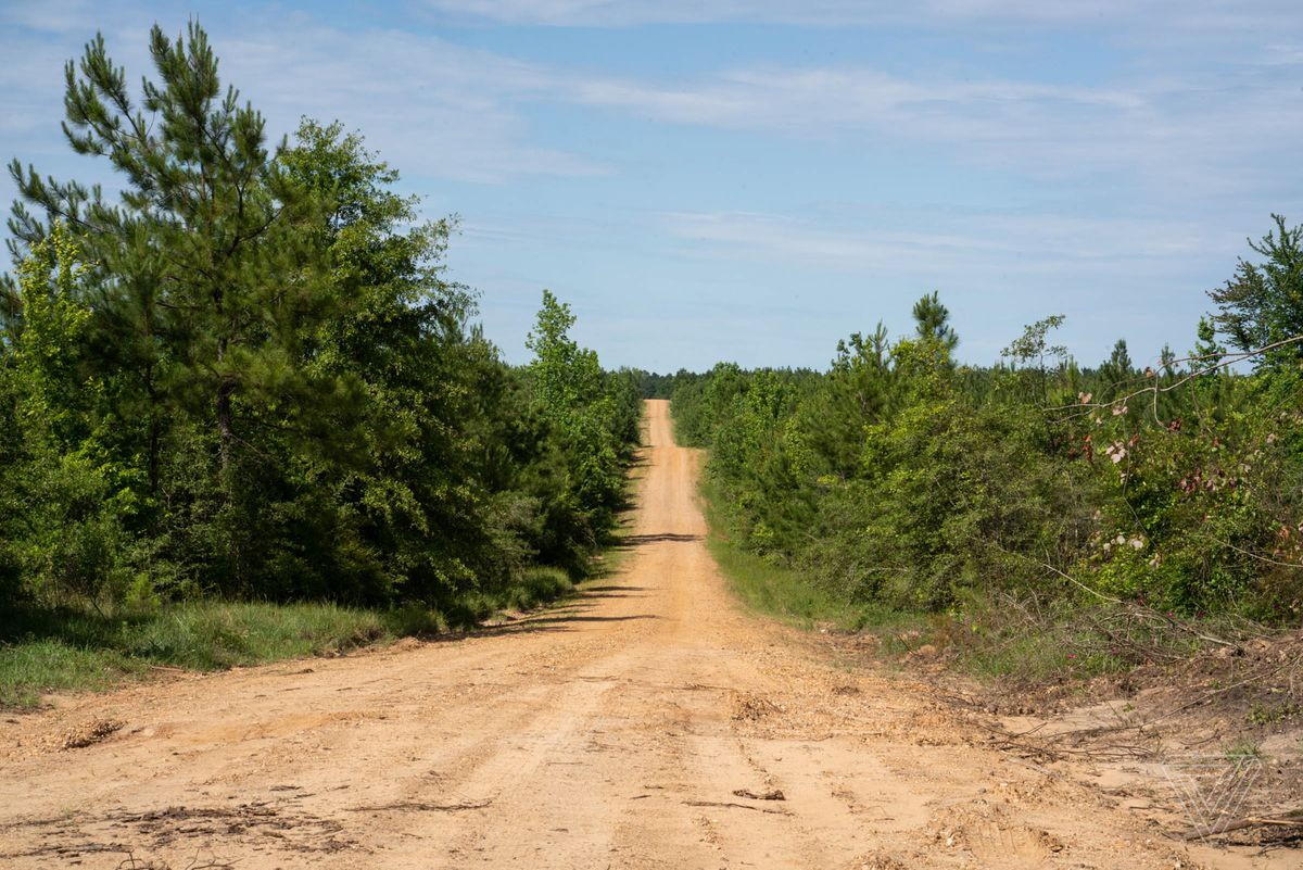 A rural dirt road is flanked by low trees under a clear blue sky.