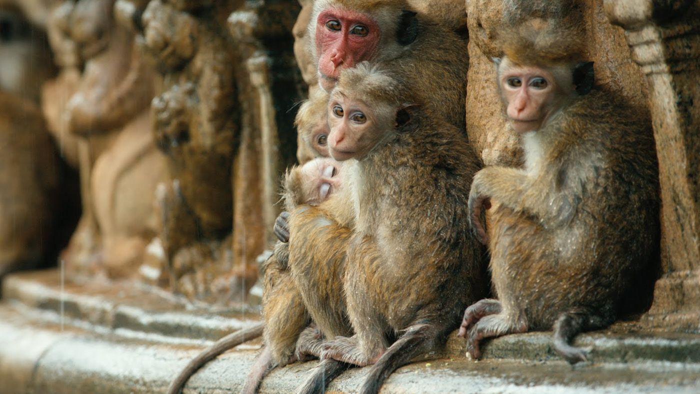 watch monkey kingdom full movie online free