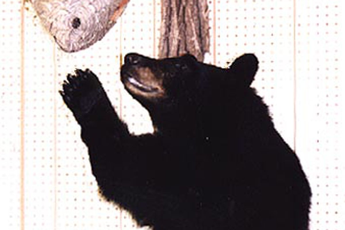 """Photo courtesy <a href=""""http://www.simpsontaxidermy.com/photopage.htm"""" target=""""new"""">Simpson Taxidermy Online</a>"""