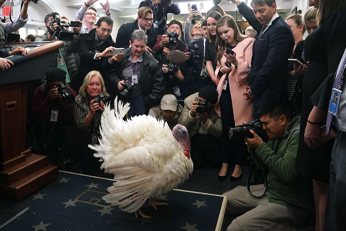 President Trump And First Lady Melania Hold National Thanksgiving Turkey Pardoning Ceremony