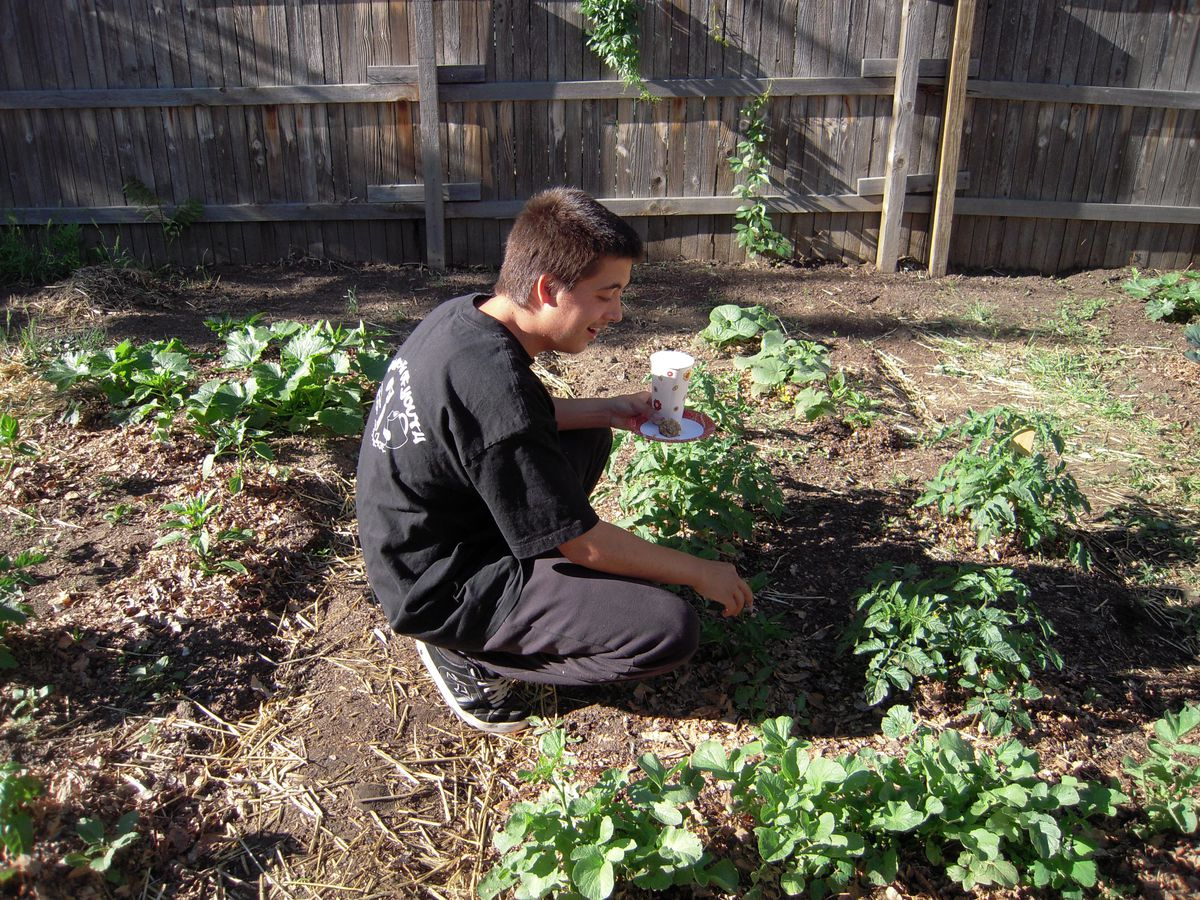 North High School student Daniel Sainz works his plot in the DPS Garden of Youth.