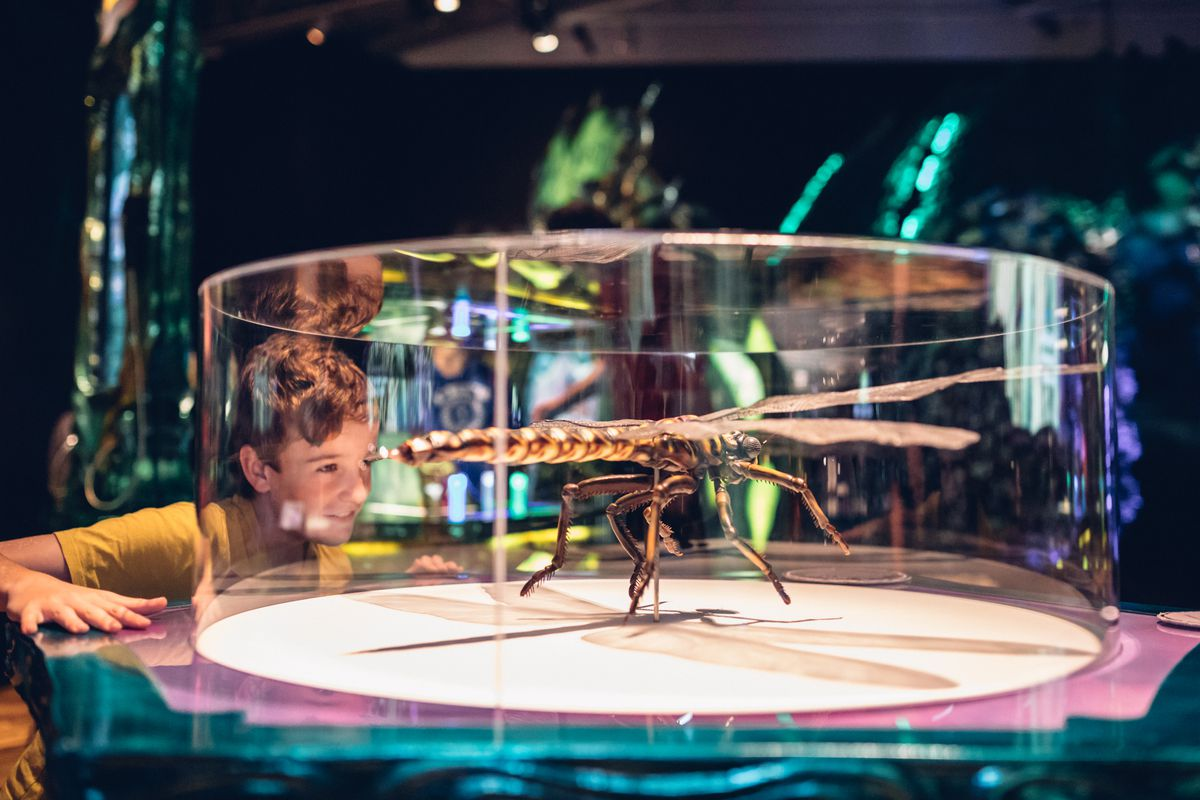 """This large-scale replica of a dragonfly displays the insect in mid-air. It is extremely difficult for prey to see these agile fliers coming until it's too late. Visitors can see more of these high-speed bugs in the Flight Chamber of """"Fantastic Bug Encount"""