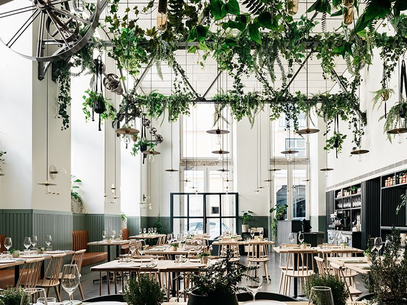 An interior shot of Prado restaurant with tall ceilings, natural light filling the room, plants hanging down from rafters, simple light wood tables and matching chairs with spindle backs.