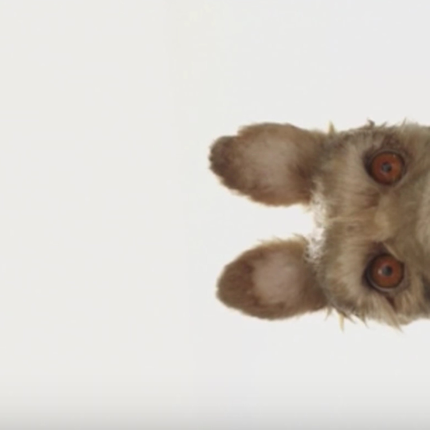 Wes Anderson Announces New Stop Motion Movie Isle Of Dogs The Verge