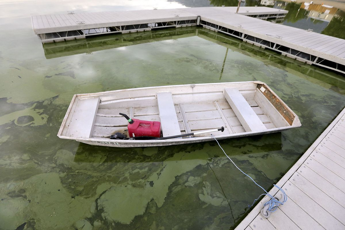 Algal blooms are pictured in Utah Lake at the Lindon Marina in Vineyard on Monday, July 19, 2021.