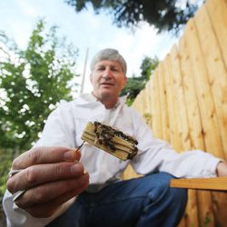 Veldon Sorensen works with his bees at his home in Salt Lake City on Sept. 13. Sorensen is retired from Bayer but still consults for the company and others about bees.