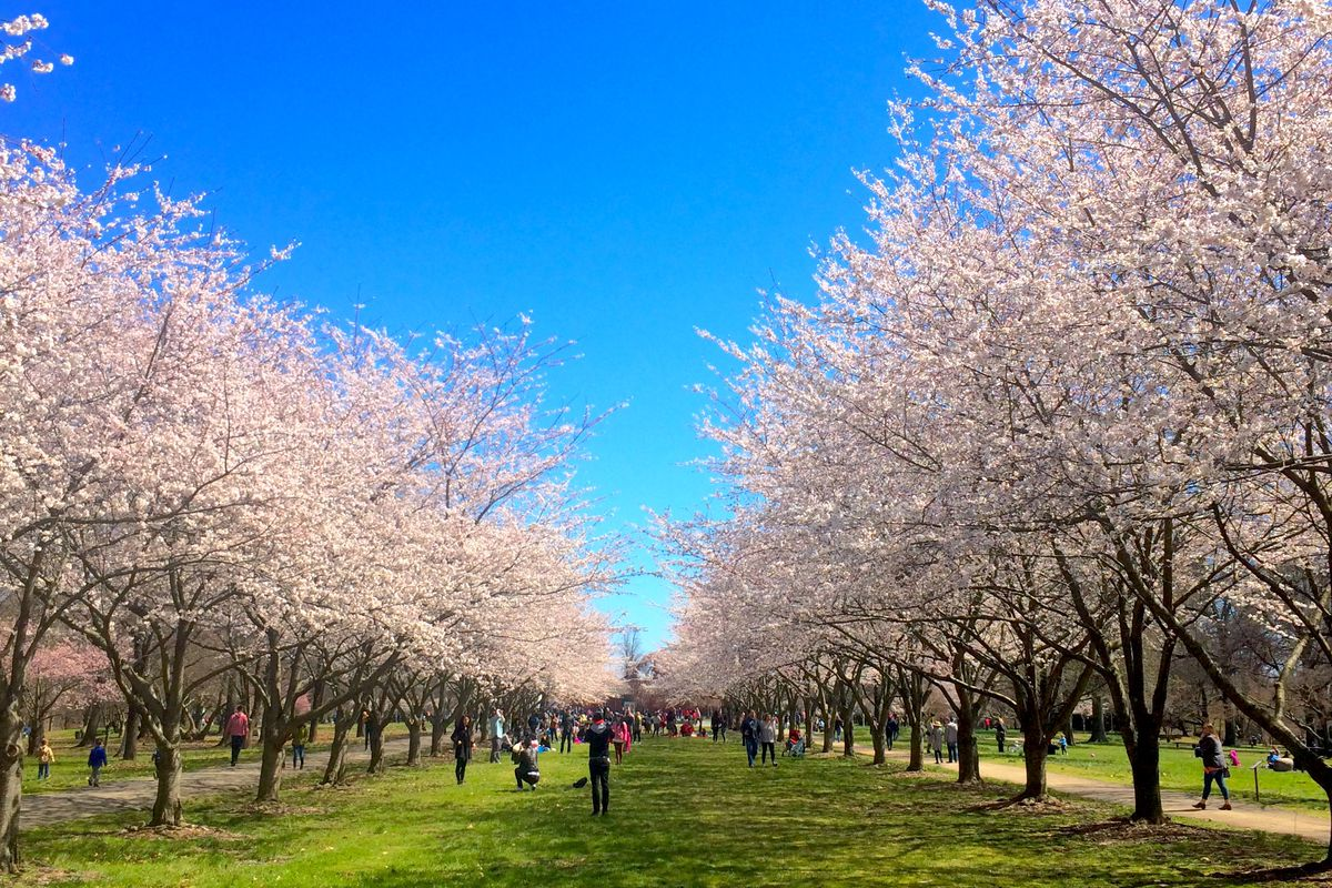 Philly S Cherry Blossom Festival In 15 Lovely Instagram