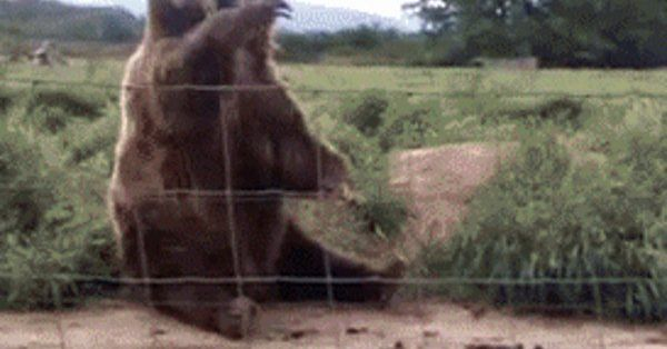 21 Best GIFs of All Time of the Week #43