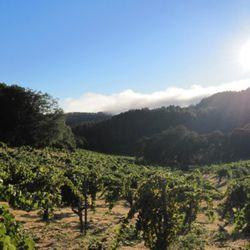 Mayacamas vineyards. [source: Mayacamas]