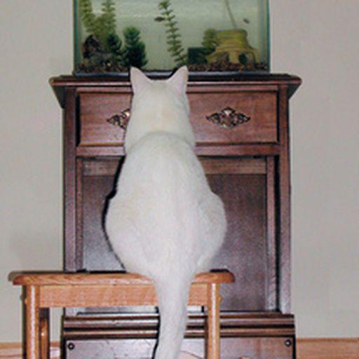 Dexter watching fish