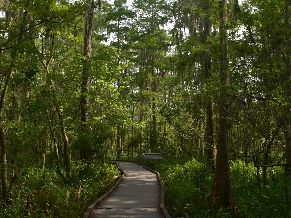 A path at the Barataria Preserve Visitor Center in New Orleans. The path has trees on both sides.