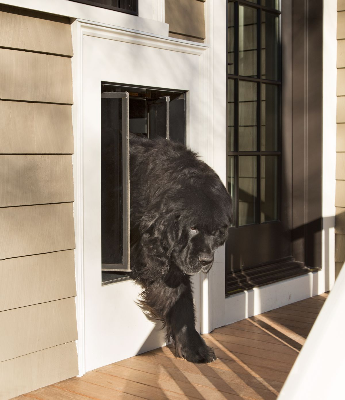 Dog walking through doggy door to the outside.
