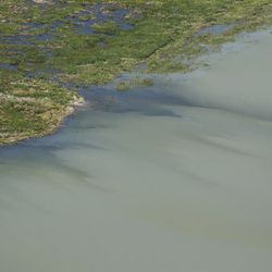 The shores of Utah Lake are pictured on Thursday, June 29, 2017. The Utah Department of Environmental Quality is warning the public and pets to stay out of the lake's  Provo Bay due to the discovery of a blue-green algal bloom.