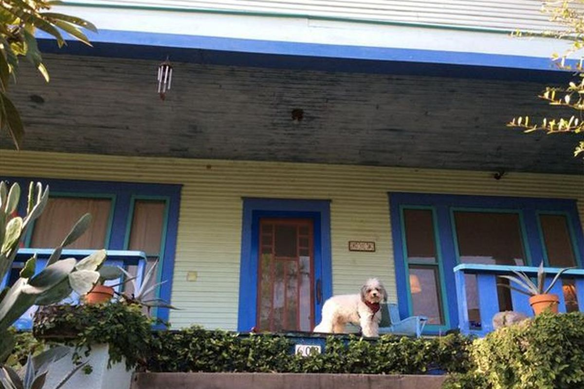Arts & crafts porch of green house with blue trim, what looks like a bichon frise standing on the railing