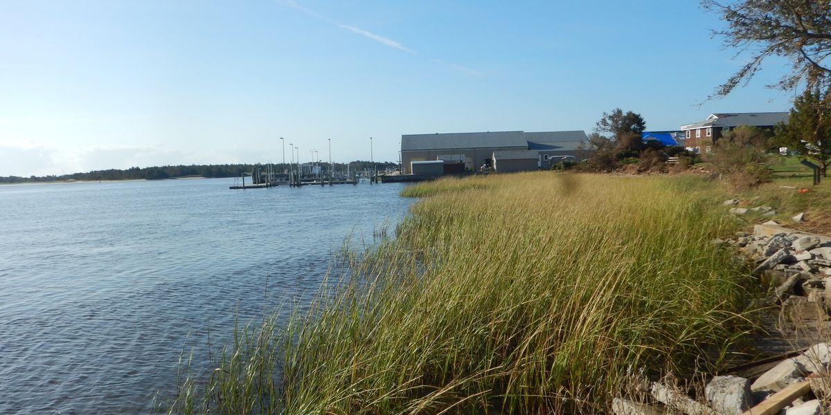 A shoreline showing water, marsh grass, and rocks, with a building in the distance.