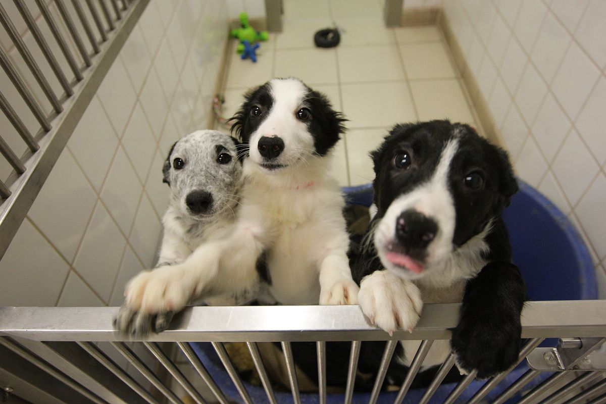 NYRBU23 players are much like puppies. Young, love to play, and popping up out of nowhere.