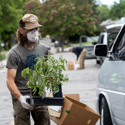Jared Hankins takes a plant toward a customer's trunk while customers wait in line to pick up fresh produce and other items ordered online in Salt Lake City on Sunday, May 24, 2020. Hand Sown Homegrown Farm workers prepared the orders the day before. When customers arrived to pick up the orders, they were left in boxes by customers' cars to follow social distancing guidelines due to COVID-19.
