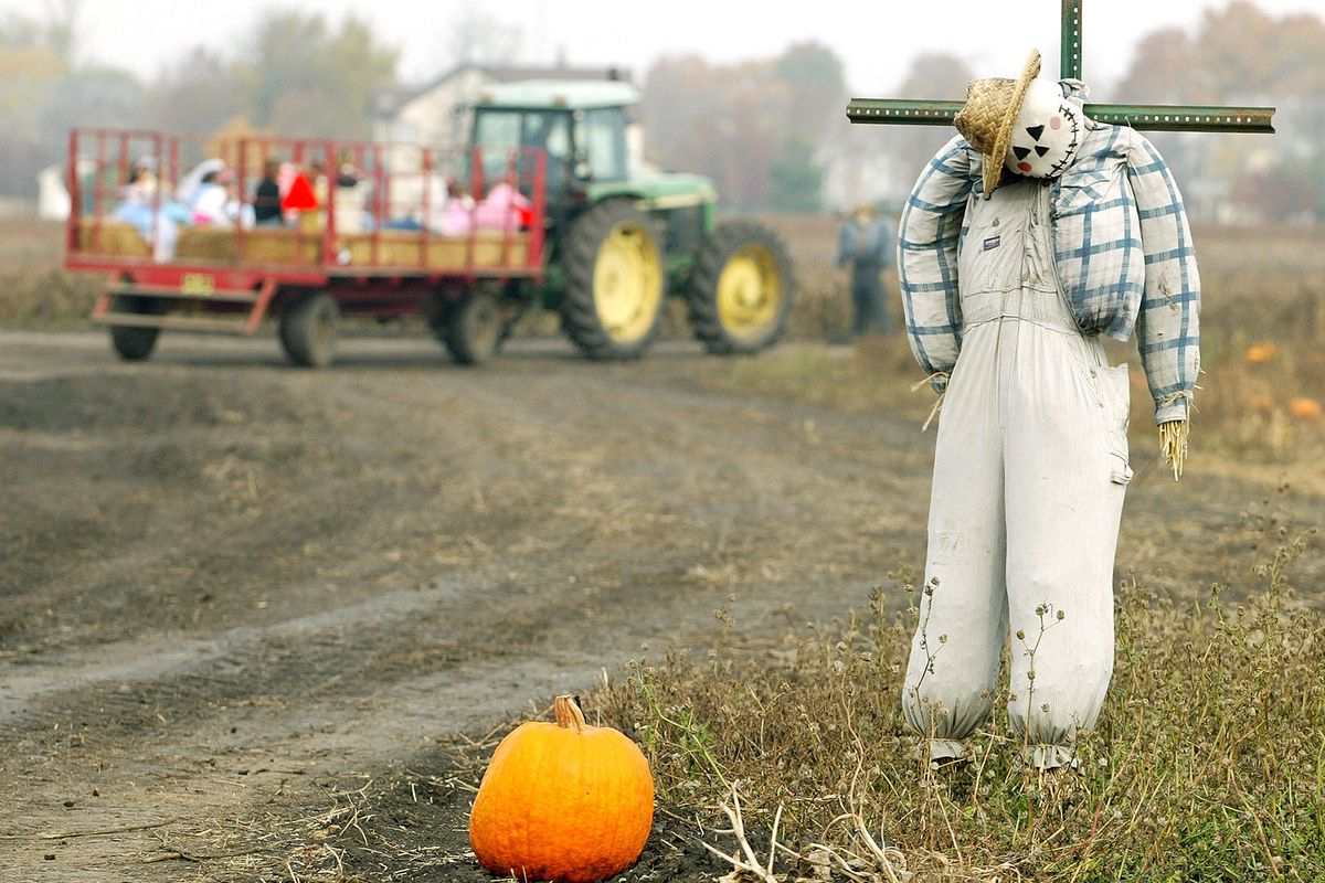 Families And Scarecrows Flock To Pumpkin Patch Before Halloween