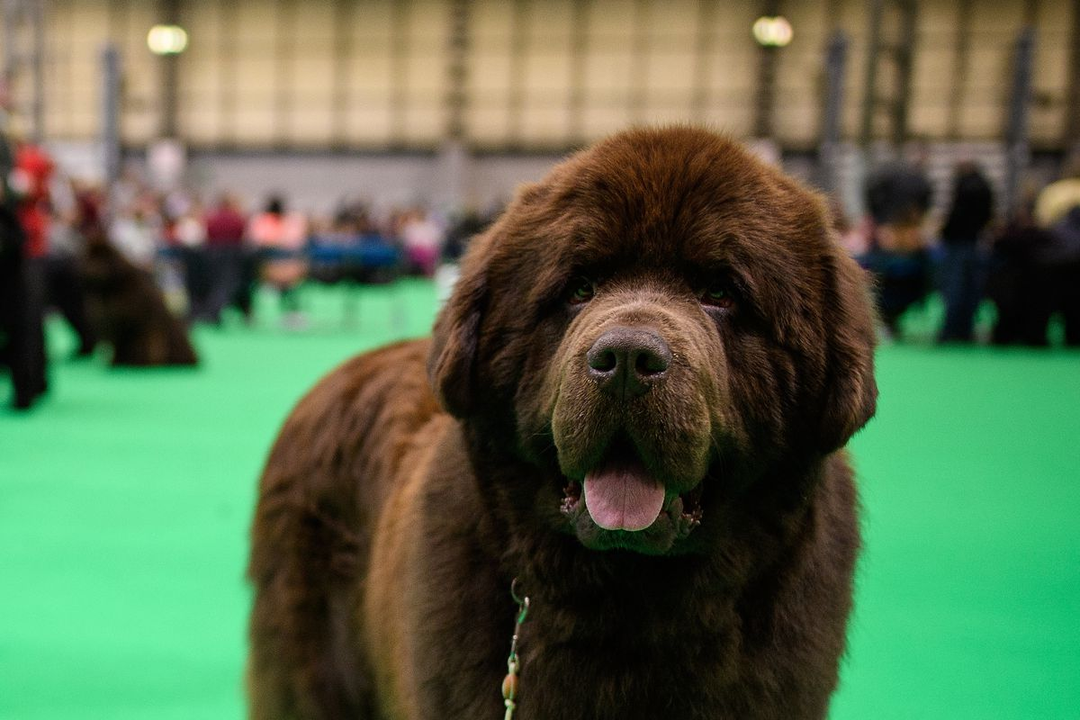 2018 Crufts Dog Show Day One