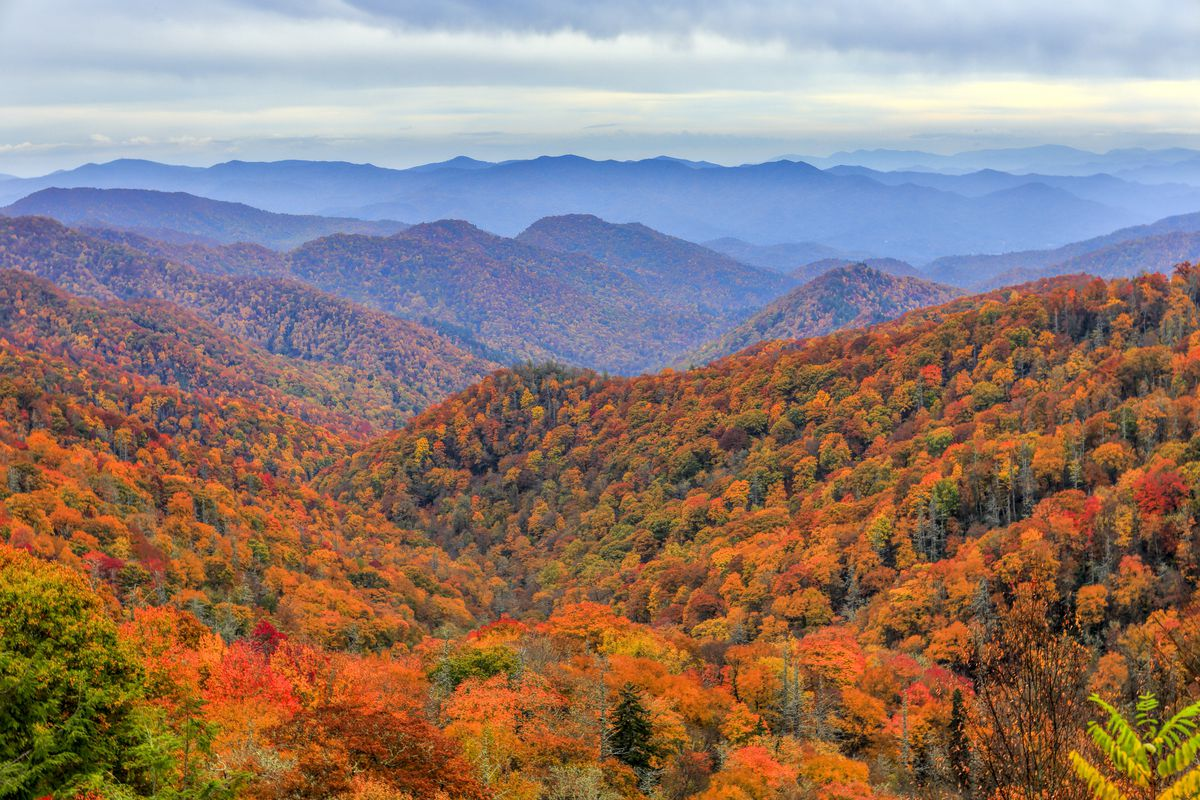 In the foreground are trees with colorful autumn leaves. In the background are the Great Smoky Mountains.