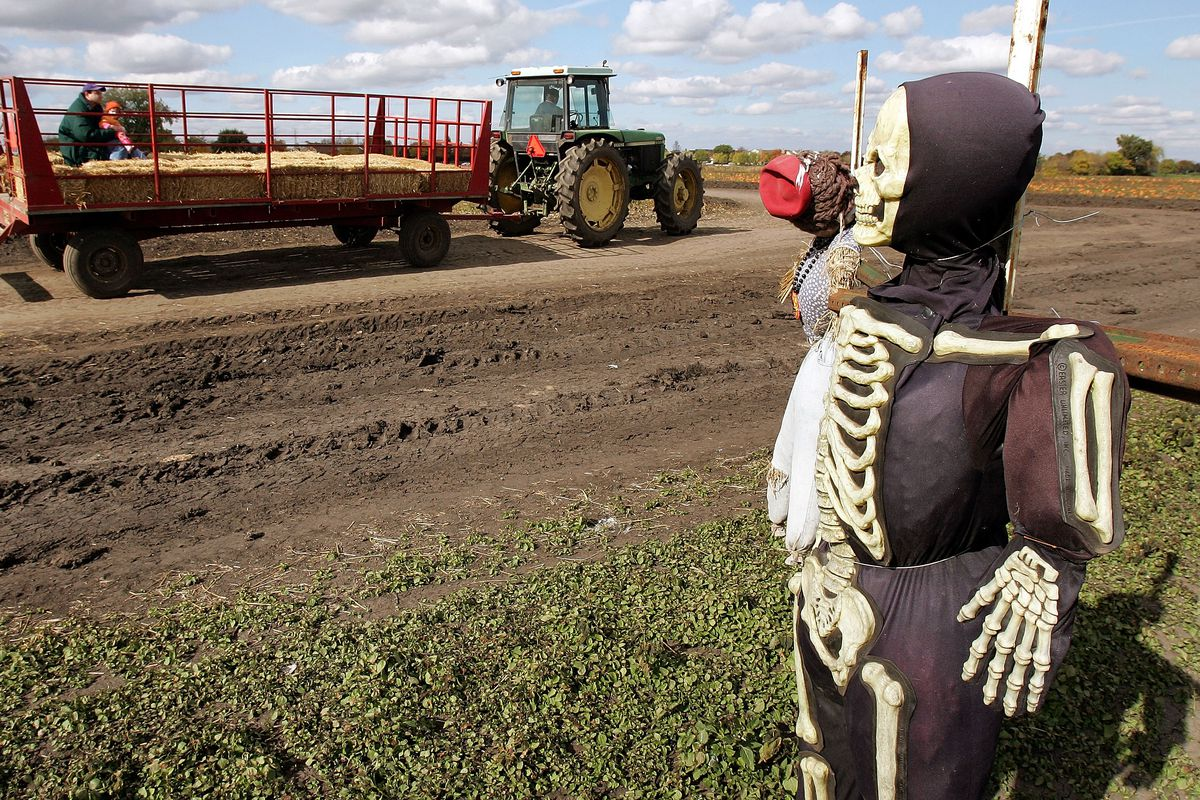 Halloween Is In The Air At Local Pumpkin Patch
