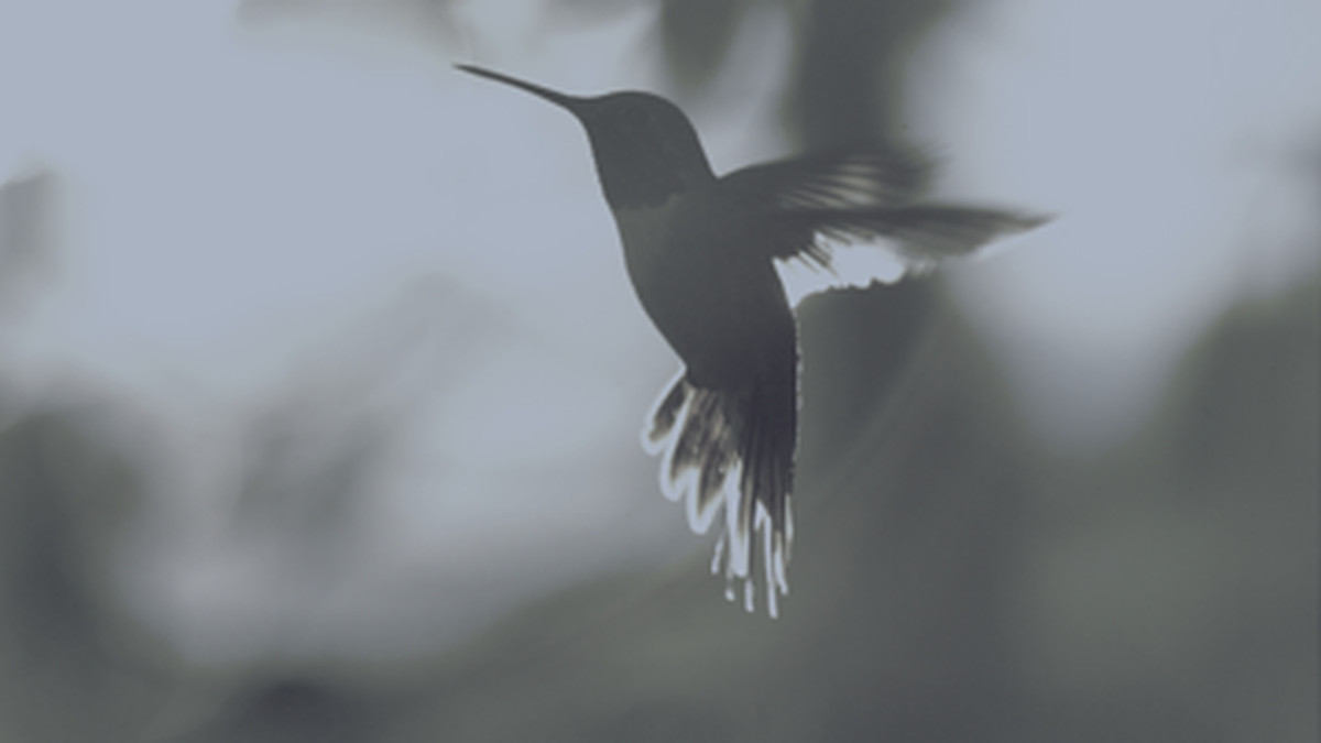 A hummingbird feeds as the sun sets.
