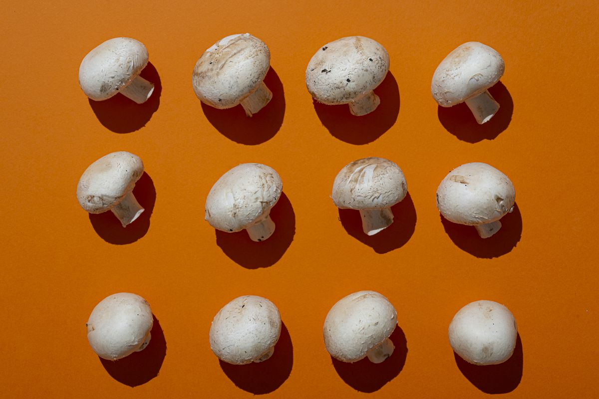 A photo of 12 white mushrooms on an orange background, arranged in a 3 by 4 pattern.