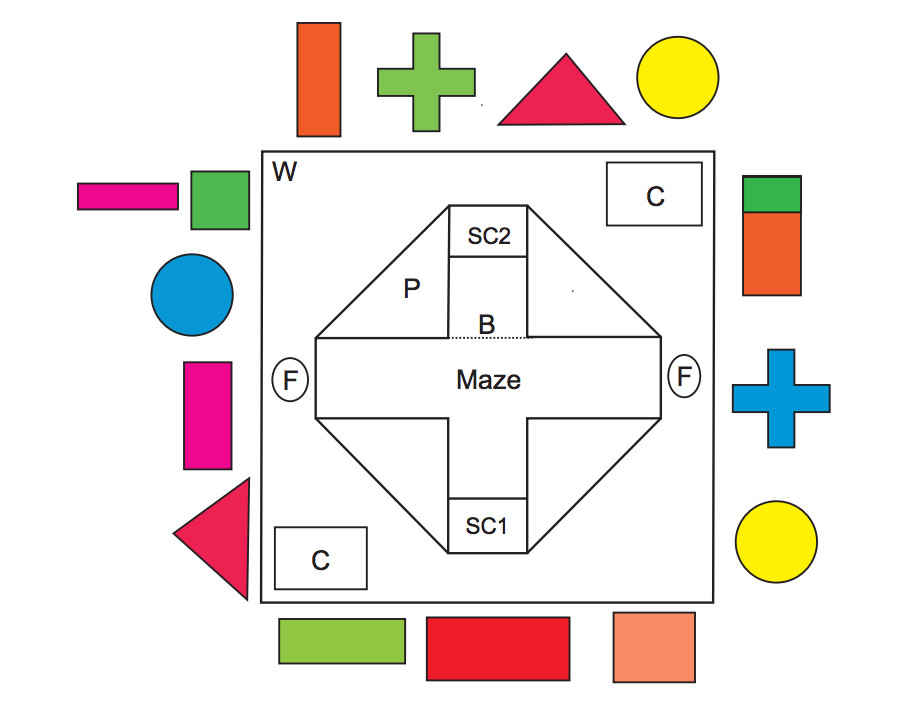 The sharks started in SC1 or SC2 and learned to consistently navigate to one of the two food spots (F) based on colored shapes printed on the maze's walls.