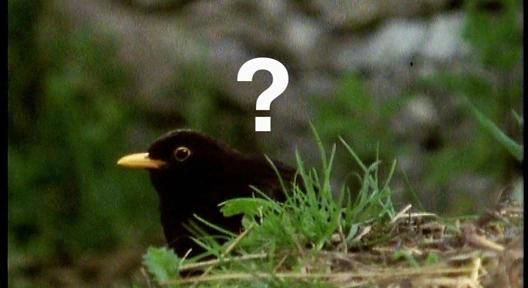 Image is of a little black bird with a question mark over its head. This bird is not as up on its Kings prospects as it should be.