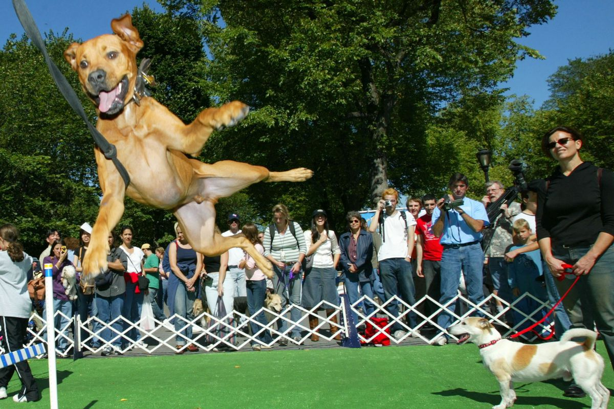 Dogs Compete In American Mutt Show