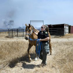 Kim DeWoody with Placer County Animal Control moves a horse to safety at Creekwood Equestrian Park whose paddock was dangerously close to a grass fire burning in Elverta, Calif., Monday, July 27, 2015.