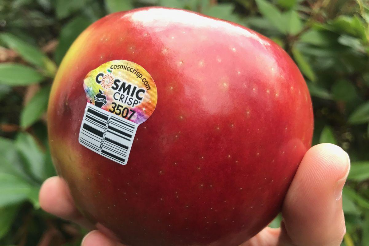 「cosmic crisp apple」的圖片搜尋結果