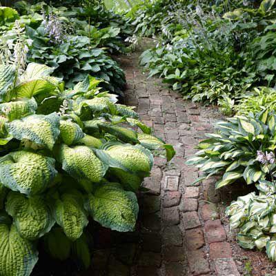 Grow A Lush Shade Garden With Hostas This Old House