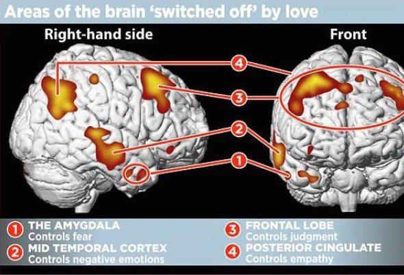 love amygdala