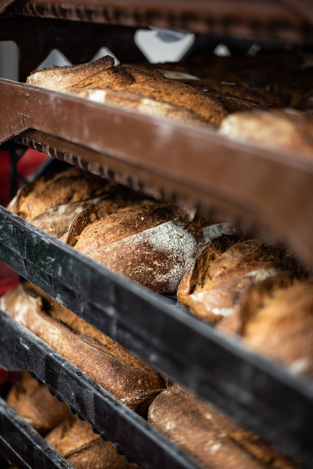 Wholesale breads cool on a rack.