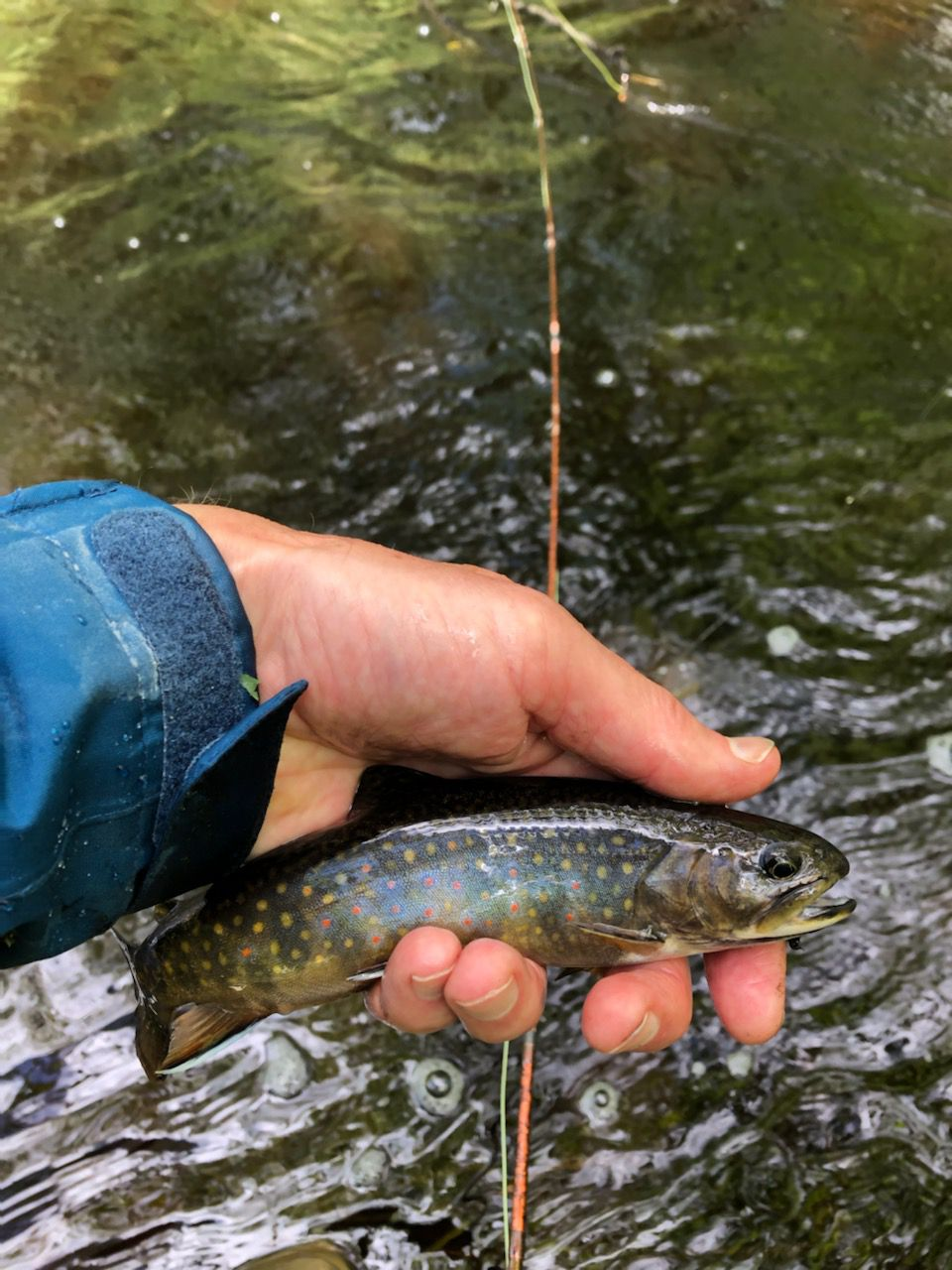 A brook trout from northern Wisconsin. Provided by Pete Lamar