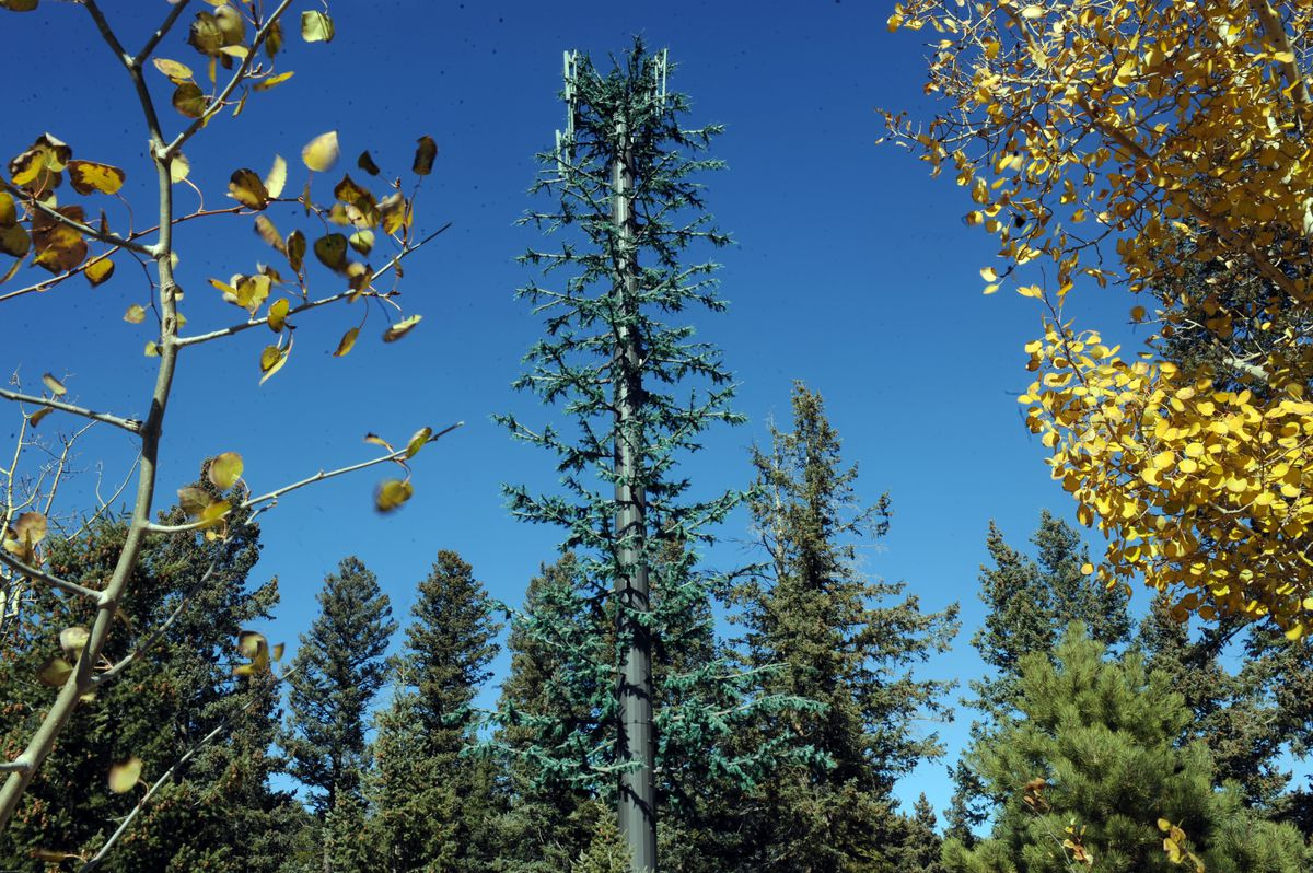 pine cell phone tower