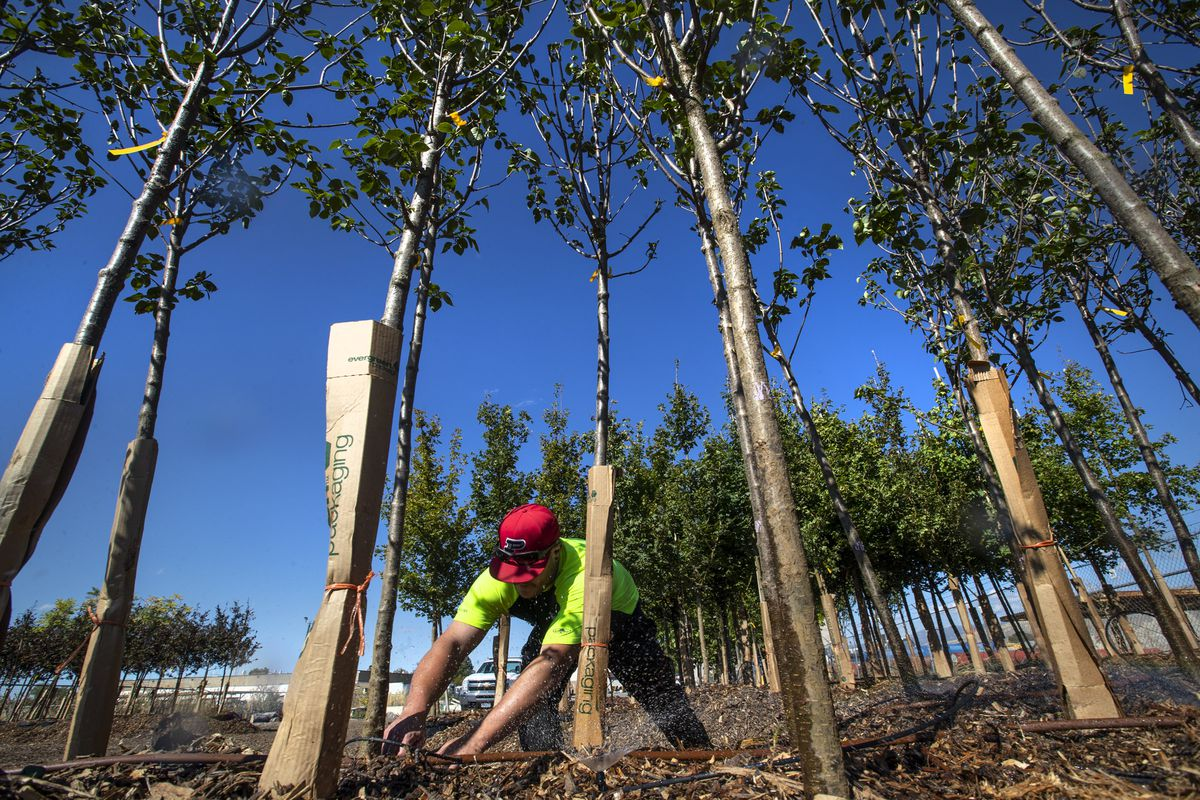 America's tree crisis: Why city planners are scrambling to replace the shrinking canopy