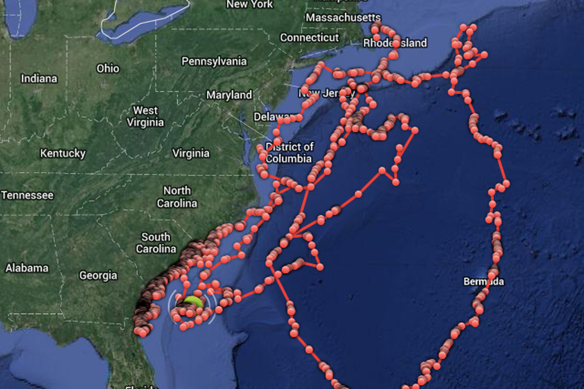 You can now track sharks off the East Coast in real time - The Verge