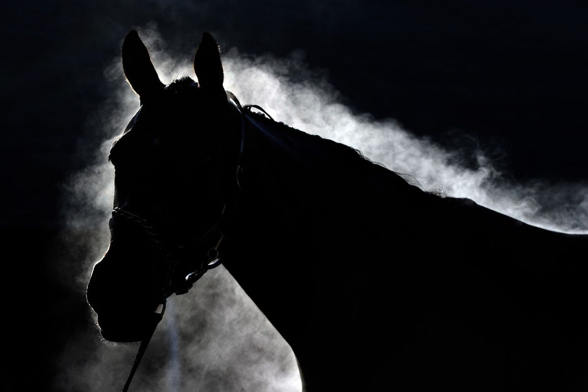 LOUISVILLE, KY - MAY 05:  A horse is bathed in preparation for the 137th Kentucky Derby at Churchill Downs on May 5, 2011 in Louisville, Kentucky.  (Photo by Harry How/Getty Images)