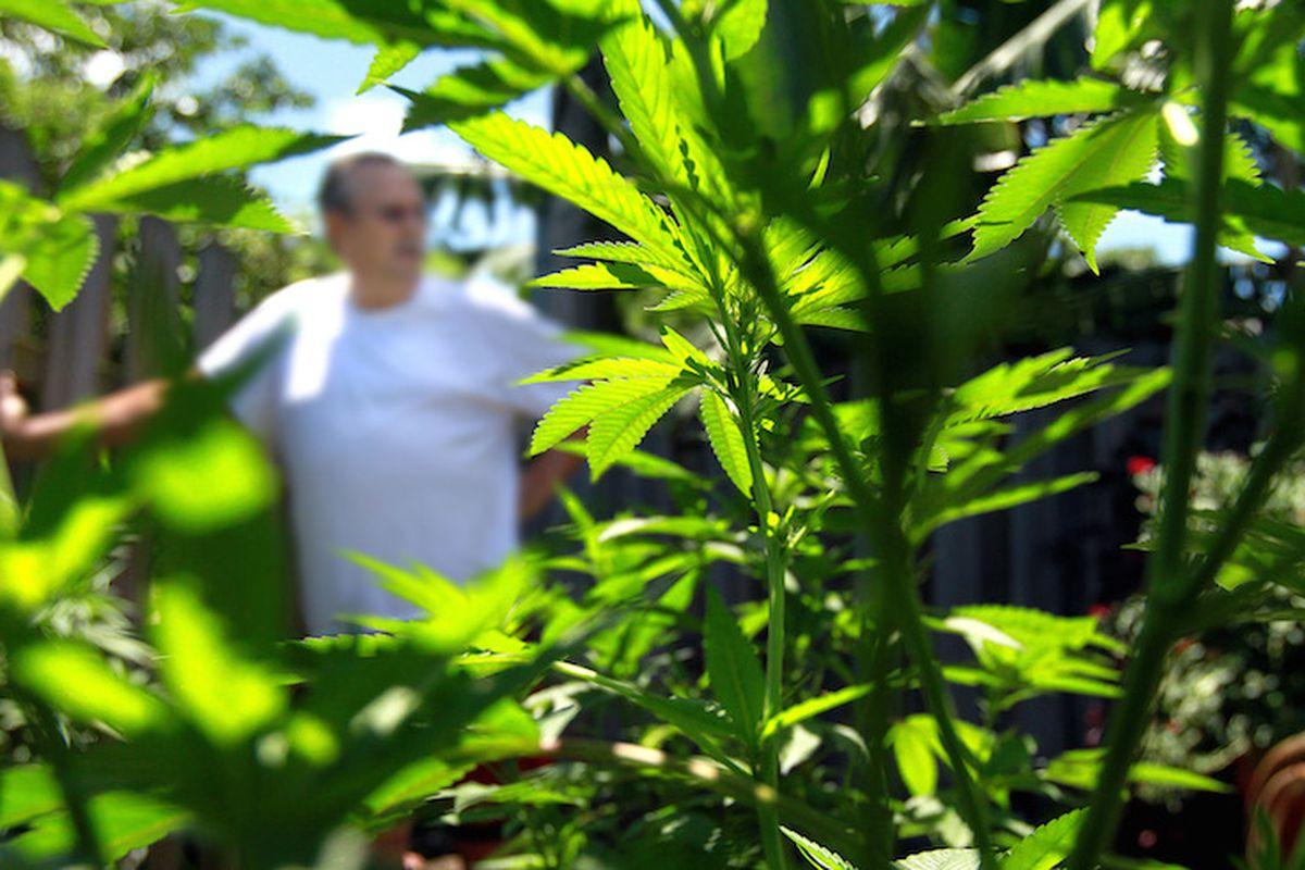 Some Florida residents already grow marijuana for medical purposes.
