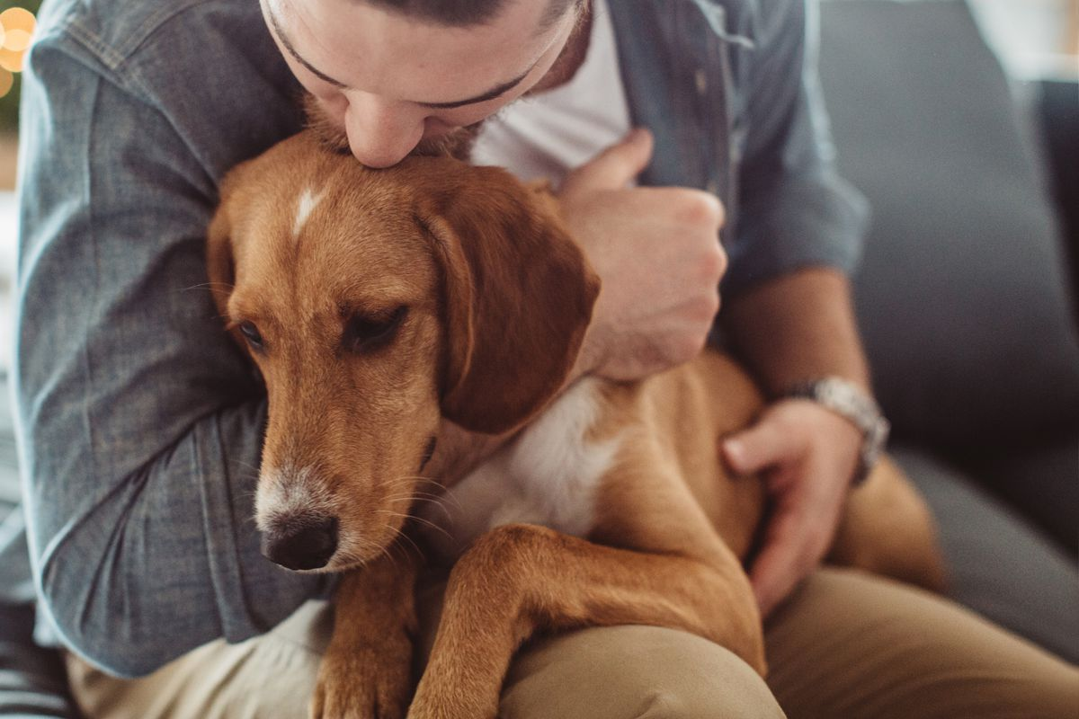 Emotional support animals: there's surprisingly weak scientific evidence on  whether they help - Vox