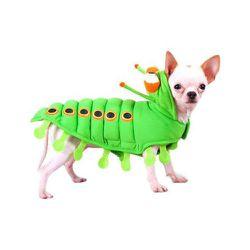 """<strong>Puppe Love</strong> Caterpillar Dog Costume, <a href=""""http://www.walmart.com/ip/Puppe-Love-Caterpillar-Dog-Costume-Dogs/13185088"""">$36.16</a> at Walmart"""